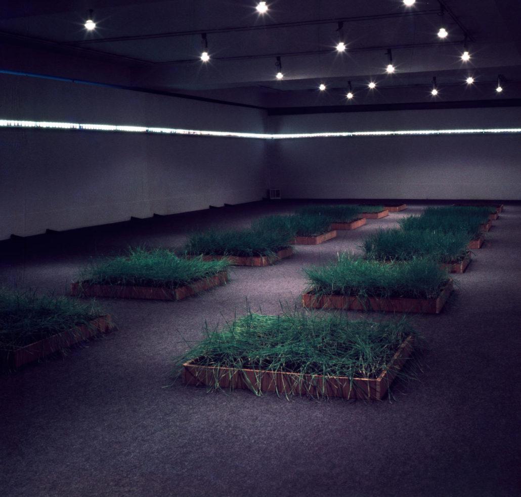 366 seasons - a field